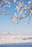 Branch covered with snow and with landscape in background, winter scenery Royalty Free Stock Photos
