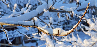 Branch covered with snow Royalty Free Stock Images