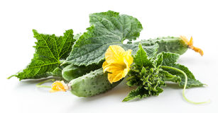 Branch of cucumbers with leaves and flowers. On white background Stock Photo