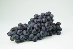 Branch of dark blue wine grapes Royalty Free Stock Photography