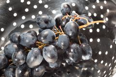 A branch of dark grapes in a metal colander stock photo