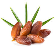 Branch of date fruits Royalty Free Stock Photo
