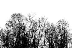 Branch of dead tree, Black and white. (monochrome) picture Royalty Free Stock Photography