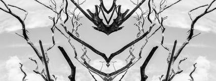 Branch of dead tree. Branch of dead tree, Black and white monochrome picture Stock Images