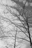 Branch of dead tree. Branch of dead tree, Black and white monochrome picture Stock Image