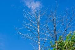 Branch of dead tree. Branch of dead tree, Black and white monochrome picture Stock Photo
