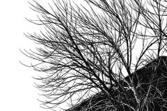 Black and white monochrome picture. Branch of dead tree, Black and white monochrome picture Stock Image