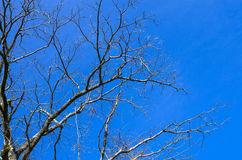 Branch of dead tree on blue sky Stock Images