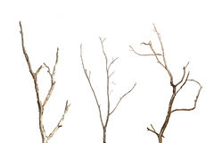 Branch of dead tree without leaf isolated on white Stock Photos