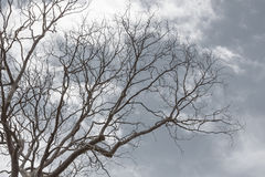 Branch of dead tree Royalty Free Stock Images