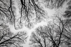 Branch of dead tree Royalty Free Stock Photos