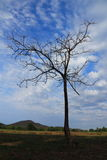 Branch of dead tree. Stock Photo