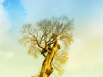 Branch of dead tree under dramatic evening cloud and sky. Stock Image