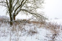 Branch of decideous tree covered by snow. Landscape Royalty Free Stock Photography