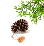 Branch of decorative home Christmas-tree, big pine cone and cham. Pagne wine cork with muselet. After New Year celebration. Isolated on white background Stock Photo