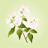 Branch decorative shrub vector Stock Photo