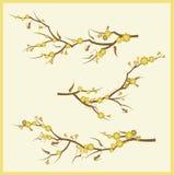 Branch design set Stock Photos