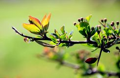 Branch Detail In Green Royalty Free Stock Image