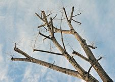 Branch diagonal Royalty Free Stock Image
