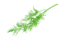 A branch of dill Stock Images