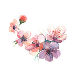 The branch dissolve flowers watercolor  painting watercolor  Stock Photos