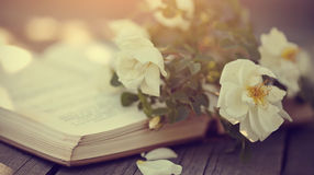 Branch of a dogrose and the old open book Stock Photos