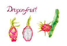 Branch with dragon fruit, whole fruit and cut half slice, hand painted watercolor illustration with inscription isolated on white. Background Stock Image