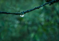 Branch with drops of dew stock image