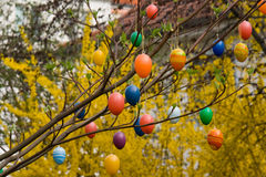 Branch with Easter eggs Royalty Free Stock Photos