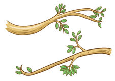 Branch Stock Images