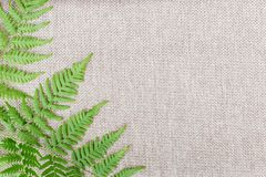 Branch of a fern on a beige background stock photos