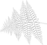 Branch of fern in the lines Royalty Free Stock Image