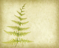 branch of a fern on old paper Stock Images