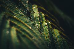 Branch of fern with raindrops royalty free stock photography