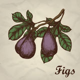 Branch with figs hand drawn vintage style. Vector illustration Royalty Free Stock Image