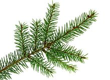Branch of fir Stock Photos