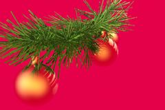 Branch fir and Christmas ball. Stock Photos