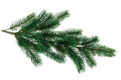 Branch of fir. Green branch of fir. Isolated on white background Stock Photos