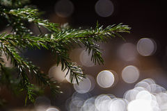 Branch of fir with round bokeh. Green branch of christmas tree with round bokeh on background Royalty Free Stock Photos