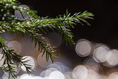 Branch of fir with round bokeh. Green branch of christmas tree with round bokeh on background Stock Photos