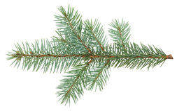 Branch of fir-tree Stock Photos
