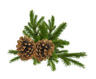 Branch of fir-tree and cone isolated on white Stock Images