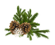 Branch of fir-tree and cone isolated on a white background Royalty Free Stock Image