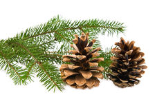 Branch of fir-tree and cone Royalty Free Stock Photography