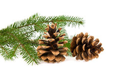 Branch of fir-tree and cone Stock Photo