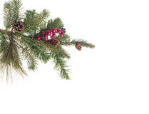 Branch of fir tree with cones and red berries Royalty Free Stock Photo