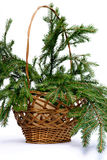 Branch Fir-tree In Basket Royalty Free Stock Image