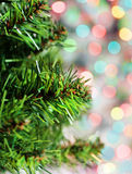 Branch of fir tree on the shiny background Stock Photography