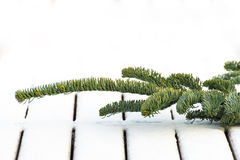 Branch of fir tree on snow-covered deck Stock Photography