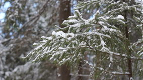 Branch of fir-tree with snow in winter forest stock footage